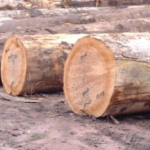 Sipo Round Logs Timber
